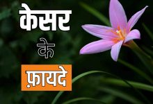 kesar benefits and side effect in hindi